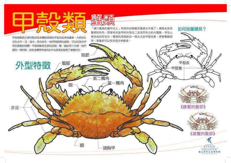 甲殼類 - 蟹