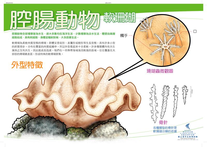 腔腸動物 - 軟珊瑚
