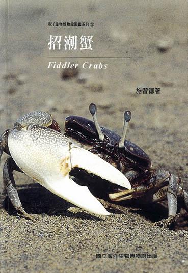 招潮蟹 Fiddler Crabs