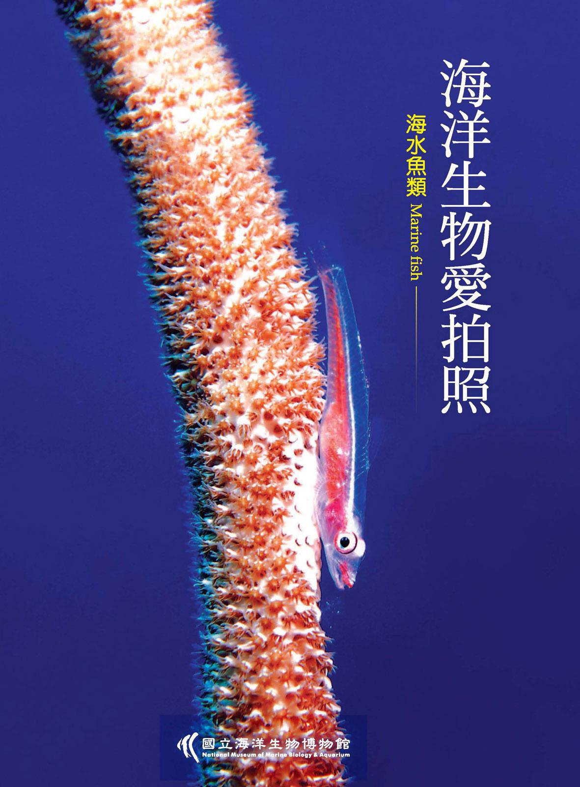 海洋生物愛拍照-海水魚類